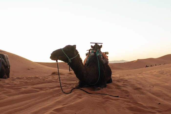 Grand Trip to Morocco: 24-03-2018